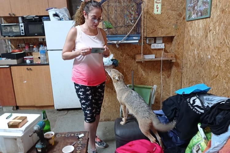 טיפול בבעלי חיים, גורה של תן ישראלי