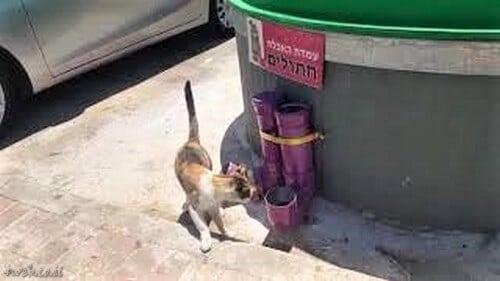 חשוב מאוד השאיר מים לבעלי החיים בחוץ