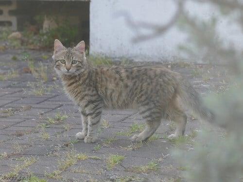 איפה אפשר להתנדב למען בעלי חיים, חתול רחוב