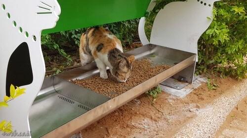 אפשרויות התנדבות על בעלי חיים