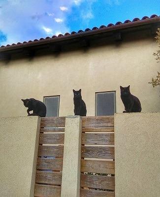 התנדבות עם חתולים. האכלת חתולי רחוב. חתולים יושבים על חומה