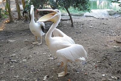אפשר להתנדב עם ציפורים בהתאמה אישית